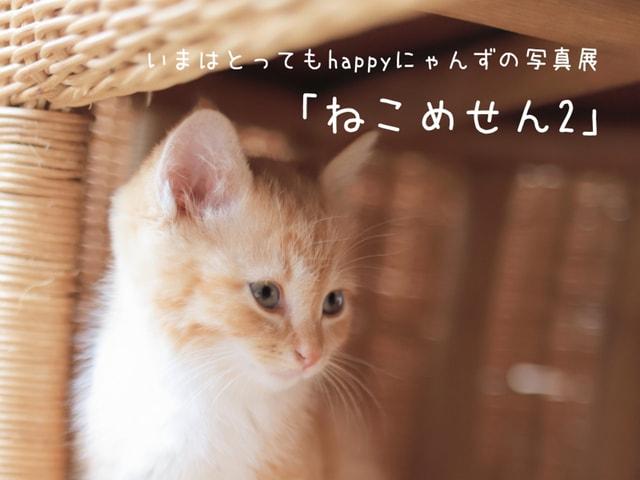 今はとってもハッピーな猫たちを捉えた写真展「ねこめせん2」