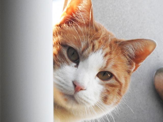 猫の飼い主さんに聞いた「熱中症」に関するアンケート調査結果が発表