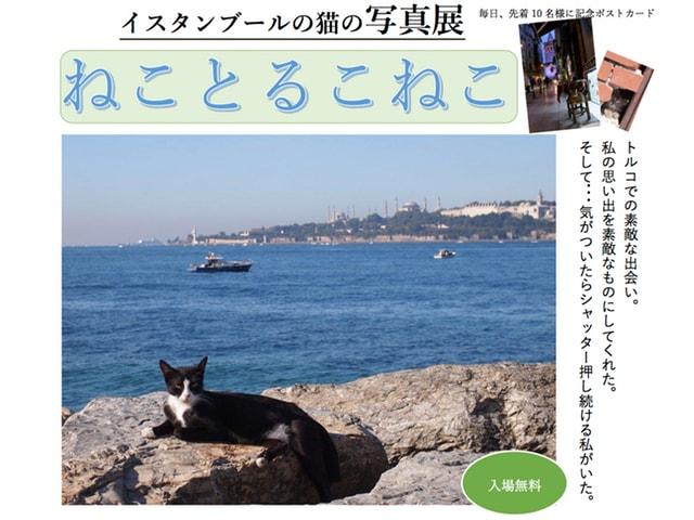 イスタンブールで暮らす猫たちの写真展「ねことるこねこ」8/28から京都で開催