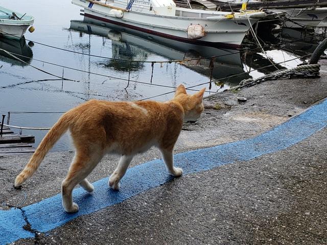 人口9名の猫島「青島」で200頭を超える全ての猫に不妊手術を実施