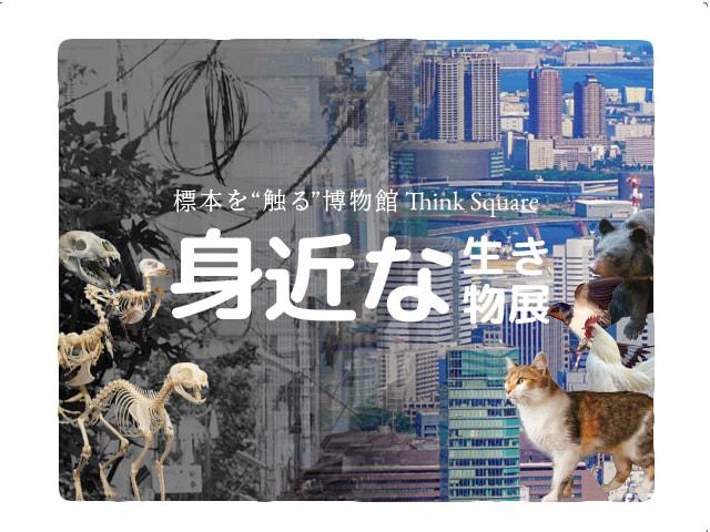 猫の全身骨格などに触れて知ってもらう「身近な生き物展」が9月から開催
