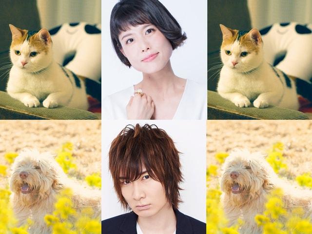 映画「旅猫リポート」人気声優の沢城みゆきと前野智昭を声役に起用