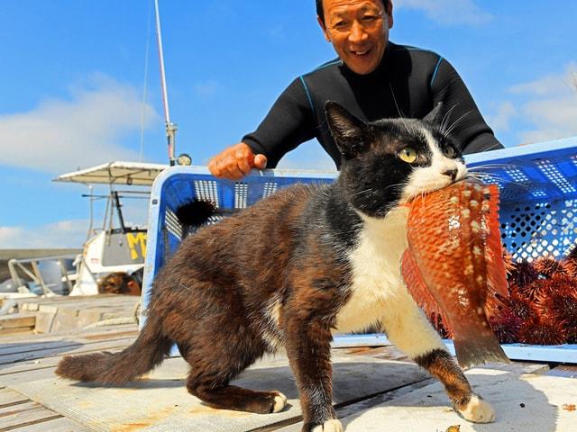 新聞の連載が書籍化!熊本県の猫島「湯島」で暮らす猫たちの日常を追った写真集が登場