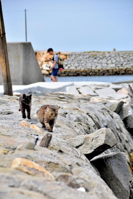 愛媛県の猫島「青島(あおしま)」の猫と観光客