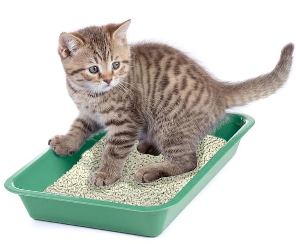 子猫がトイレで用を足しているイメージ写真