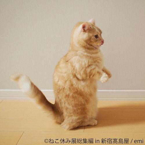 人気猫の横向き写真 by emi