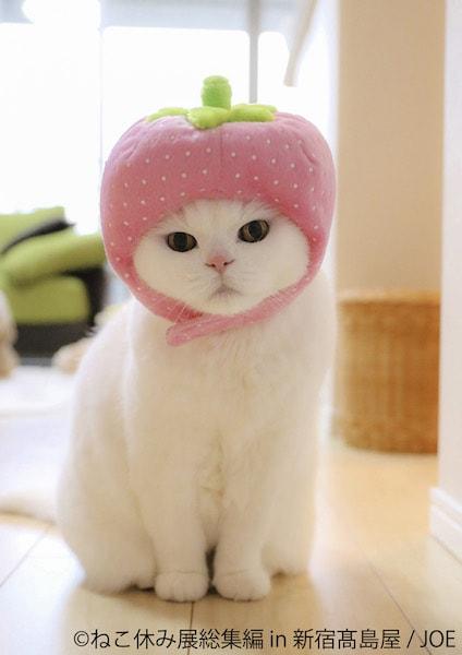桃の帽子を被った白猫 by joe