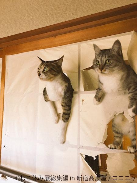 障子破りの猫 by ココニャ