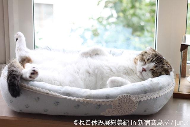 お腹を出して眠る猫 by jun.k