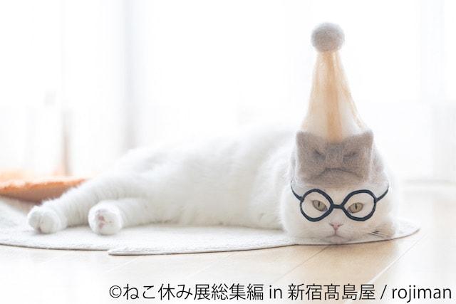 抜け毛帽子をかぶる猫 by rojiman