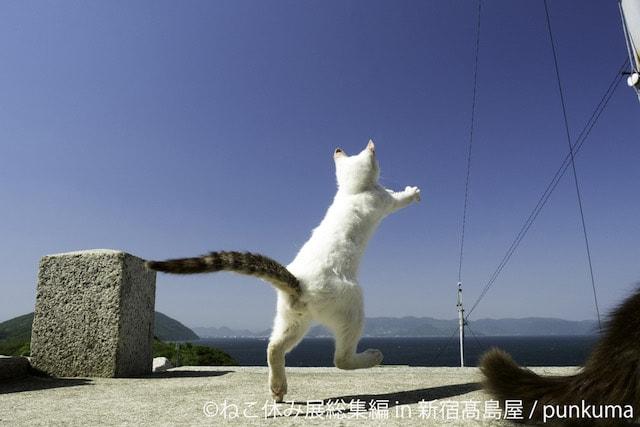 空に向かって走る猫 by punkuma