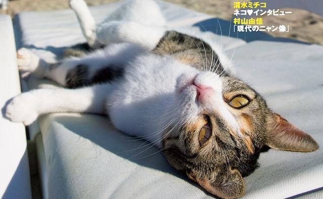 猫写真家・沖昌之さんが撮影した猫の写真 by 「NyAERA(ニャエラ)みっけ」
