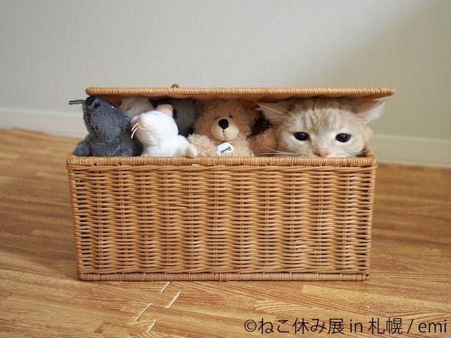 ぬいぐるみとカゴに入る猫の写真  by emi