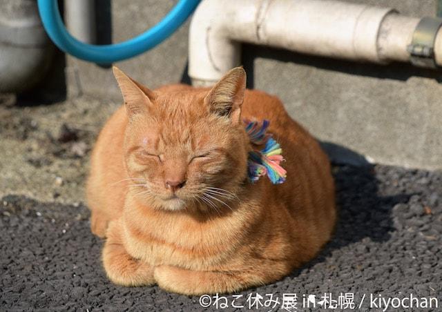 外で目をつむる茶トラ猫の写真 by kiyochan