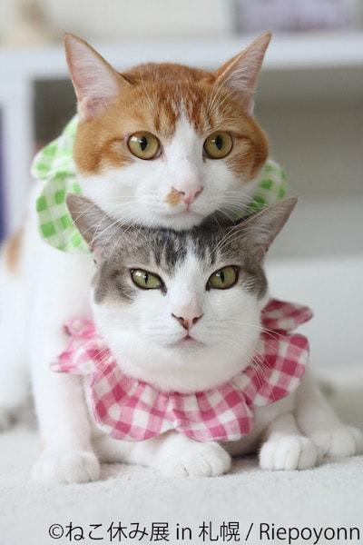 キジ白猫の頭の上に顎を乗せる茶白猫