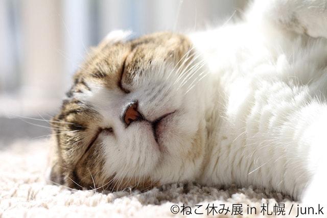 口を少し空けて爆睡する猫(どんぐり)