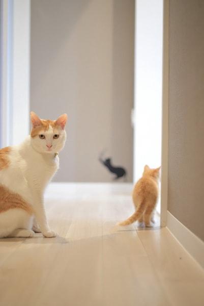こちらの様子をうかがう茶白猫 by ねこミュニケーター「nanonya.Aki」