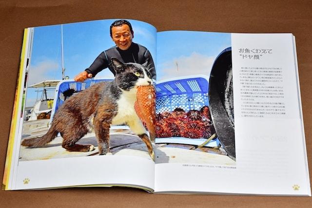写真集「猫島ありのまま 上天草・湯島」のワンカット