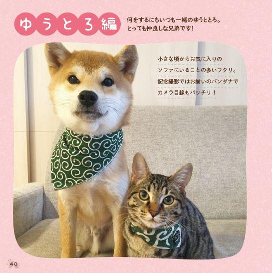 仲良く寄り添い合う2匹「柴犬ゆうと猫のとろ」の写真