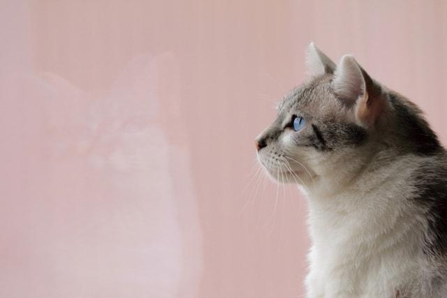 何かを見つめる猫の横顔 by ねこミュニケーター「nanonya.Aki」