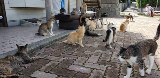 瀬戸内海に浮かぶ猫島「青島(あおしま)」の猫たち