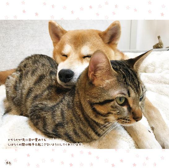 「猫のとろ」の背中に顔を乗せて気持ちよさそうな「柴犬ゆう」の写真