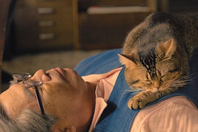 立川志の輔さん演じる主人公・大吉の上で眠る猫の「タマ」 by 映画ねことじいちゃん