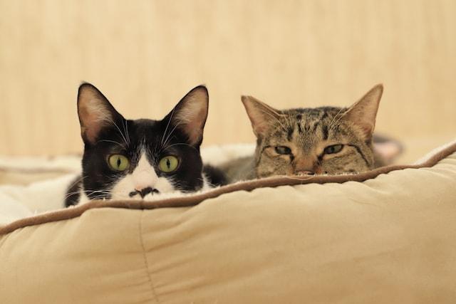 物陰からこっちをじっと見つめる2匹の猫 by ねこミュニケーター「nanonya.Aki」