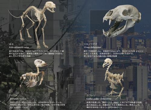 身近な生き物展で展示される動物の骨格標本イメージ