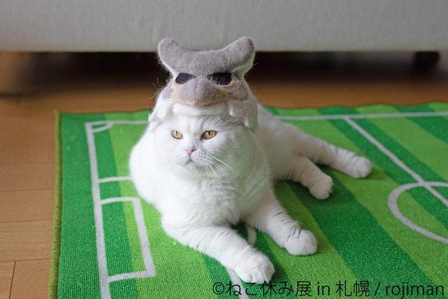 猫の抜け毛で作ったドーレくんを被る猫(前方)