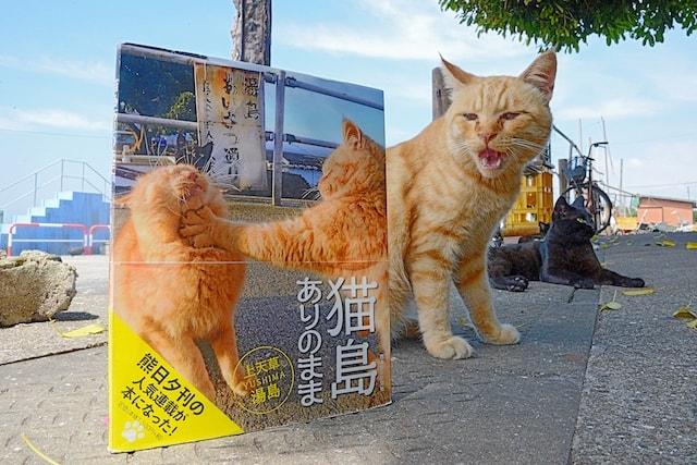 写真集「猫島ありのまま 上天草・湯島」の表紙と、表紙に登場する茶トラ猫「シマ」
