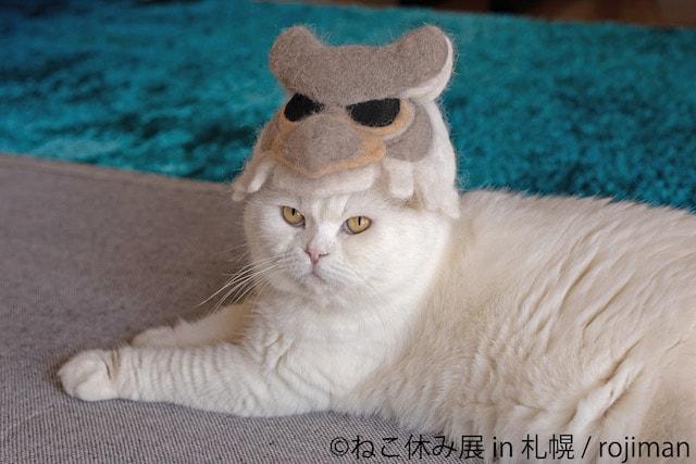 猫の抜け毛で作ったドーレくんを被る猫(真横)