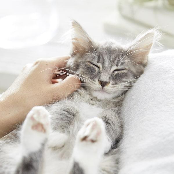 猫のロンパールームにいる猫のイメージ写真