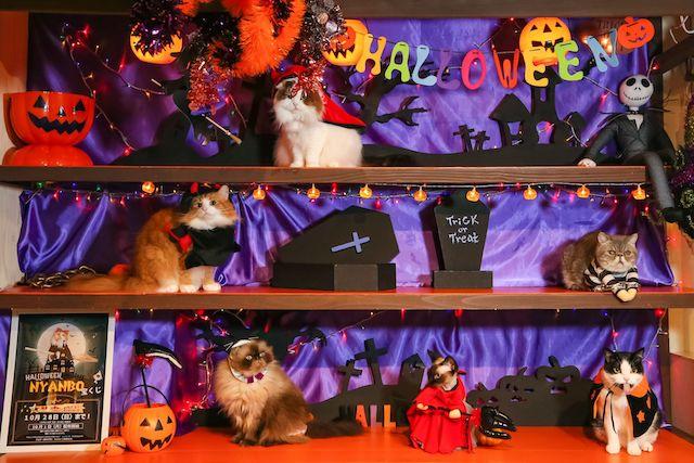 猫カフェ「猫家 大宮店」で開催されるイベント「ハロウィンニャイト」
