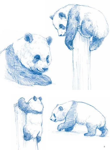 パンダのスケッチ例