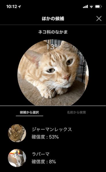 アプリ「LINNÉ LENS(リンネレンズ)」で実際に猫を認識してみたイメージ