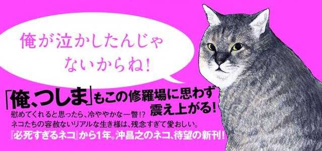 残念すぎるネコの帯