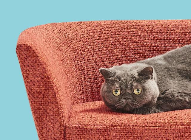 肘置きが片方だけにある猫用ソファ(拡大写真) by ネコ家具