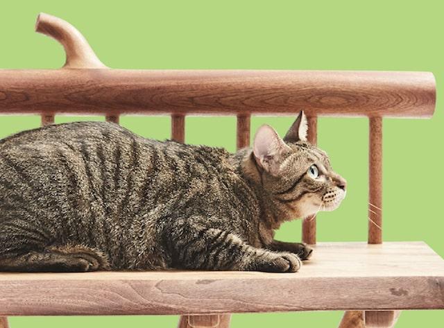 ほぞ組みで組み立てた猫用の椅子(拡大写真) by ネコ家具