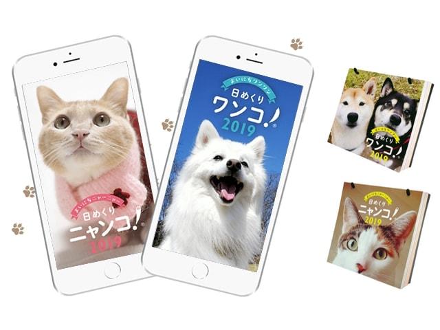 アプリでも見れる!皆の猫写真で作るカレンダー「日めくりニャンコ! 2019」