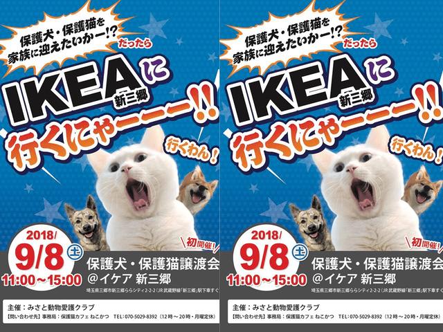 国内初、家具量販店イケアの店舗で保護猫&保護犬の譲渡会が開催
