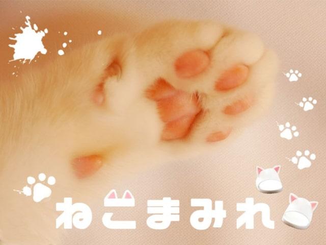 ヴィレヴァンのオンラインストアに猫グッズの特集コーナーが登場