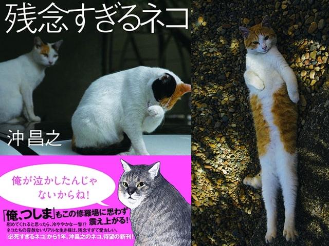 残念な猫たちの決定的瞬間を激写!沖昌之さんの新刊「残念すぎるネコ」