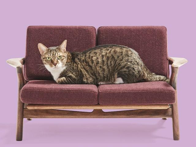 家具職人の本気作「ネコ家具」が新作5点を公開!見本市も開催されるニャ