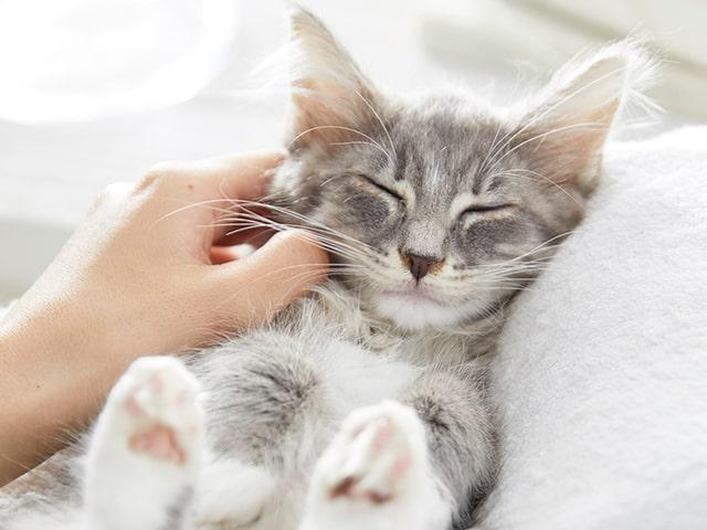 ペットと入居できる住宅型有料老人ホームに猫との触れ合いルームが誕生