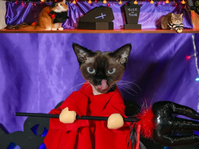猫カフェ×宝くじ×ハロウィン限定イベント「ハロウィンニャイト」 が開催