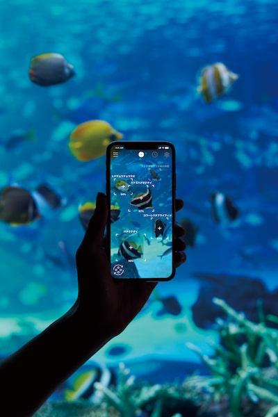 かざすAI図鑑アプリ「LINNÉ LENS(リンネレンズ)」を水族館で使用したイメージ