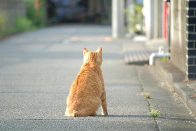 茶トラ猫の背中のイメージ写真