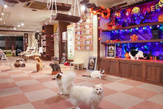 ハロウィンの装飾が施された猫カフェ「猫家 大宮店」の店内イメージ
