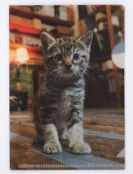 「岩合光昭の世界ネコ歩き2」のレシート入れ